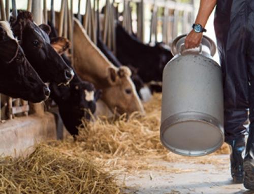 La Cámara de Comercio de Ipiales ejecuta proyecto avalado por el Ministerio de Comercio, INNpulsa Colombia y la Unión Europea para fortalecer el sector lácteo en Nariño